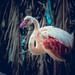 Flamingo 👍 Bird Photography  @Dubai Birds 💗 Dubai by Freeman Shutterup
