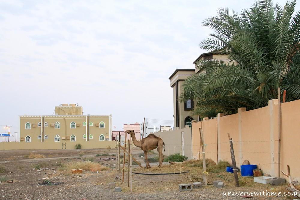 Oman_009