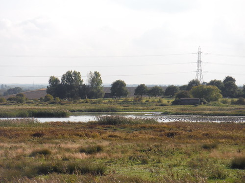 Birds in East Flood with Birdhide beyond, Oare Marshes Nature Reserve
