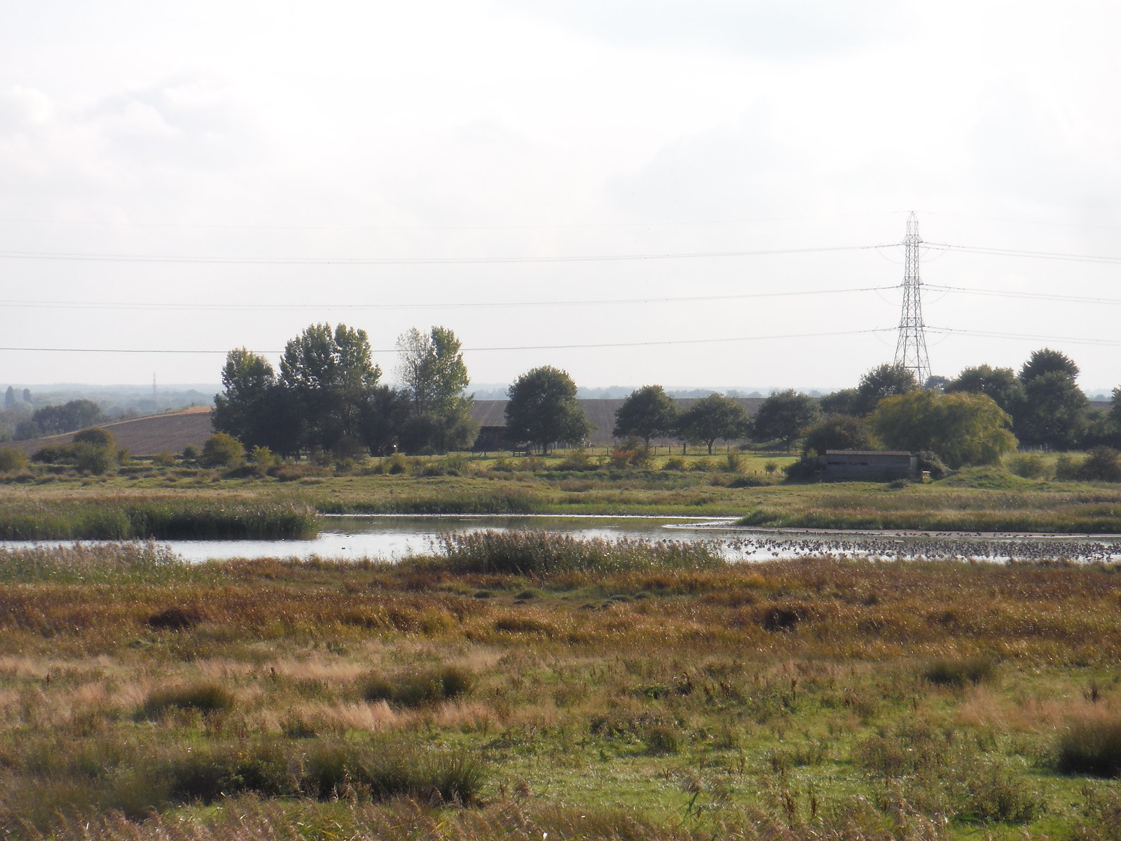 Birds in East Flood with Birdhide beyond, Oare Marshes Nature Reserve SWC Walk 299 - Teynham to Faversham