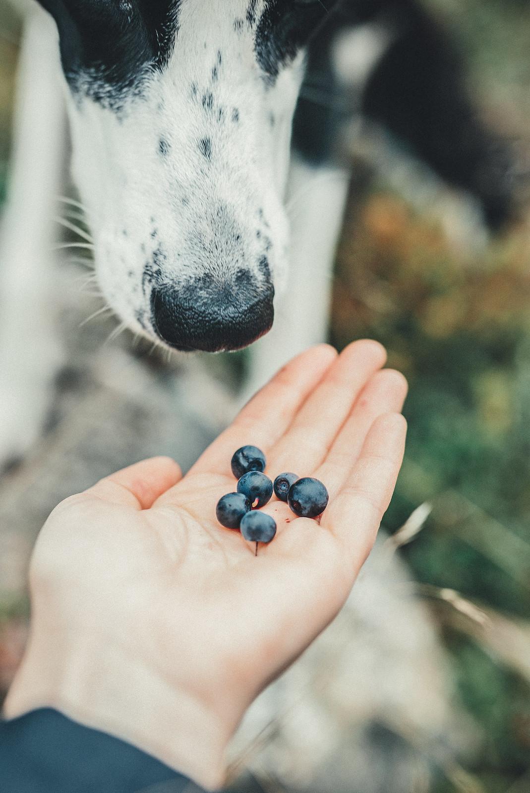 blåbär - karinevelina.se