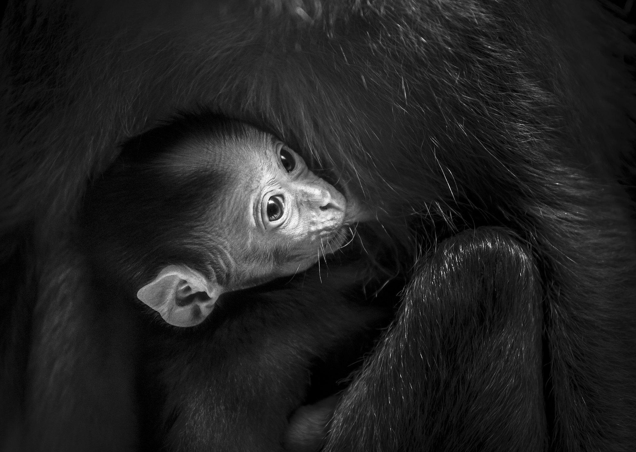 Dinner Time - abe - mørkere ansigt - lille
