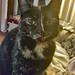 Denni Cat