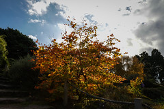 Botanic Gardens Edinburgh Oct 2017 -110