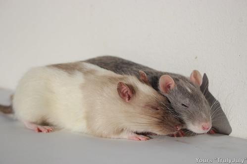 Yoshi and Sybil are bosom buddies.