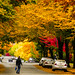 2017 Autumn Colors Transformation in Vancouver BC Canada