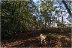 Walking in Simon's Wood