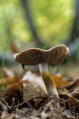 Mushroom  071115-8001