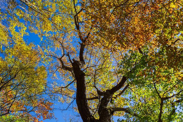 頭上を見上げると・・橙、黄、緑、青