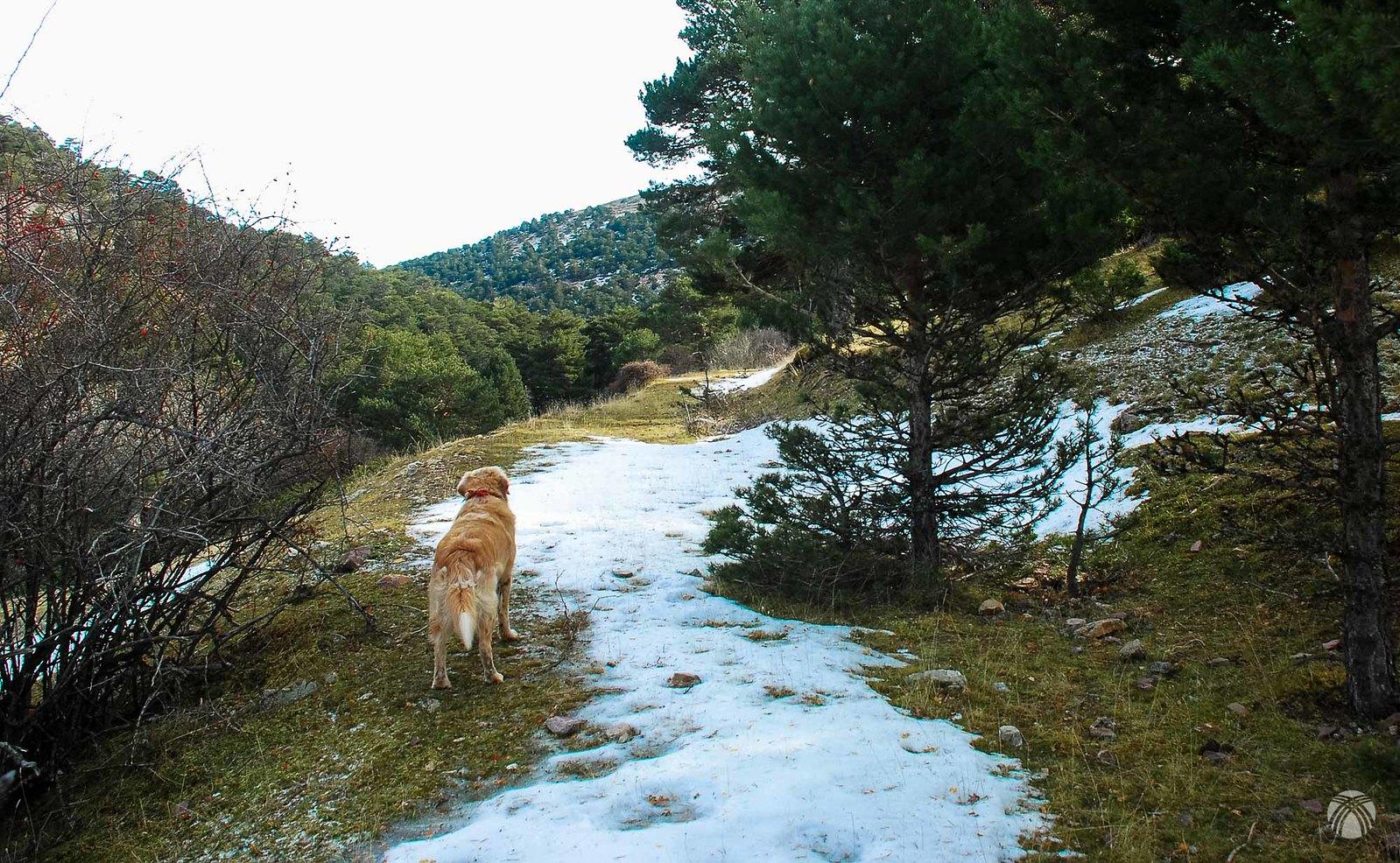 Conforme subimos, más nieve