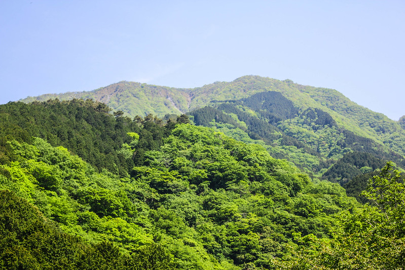 新緑の鍋割山