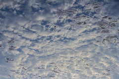 Clouds in Puddle I