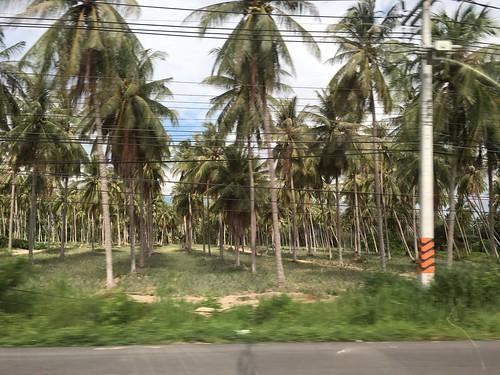 Koh Samui-Bkk Road Trip 1,500km Day 2 (chumphon-prachupkirikan-Huahin)