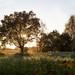 Sonneaufgang Wietze 03