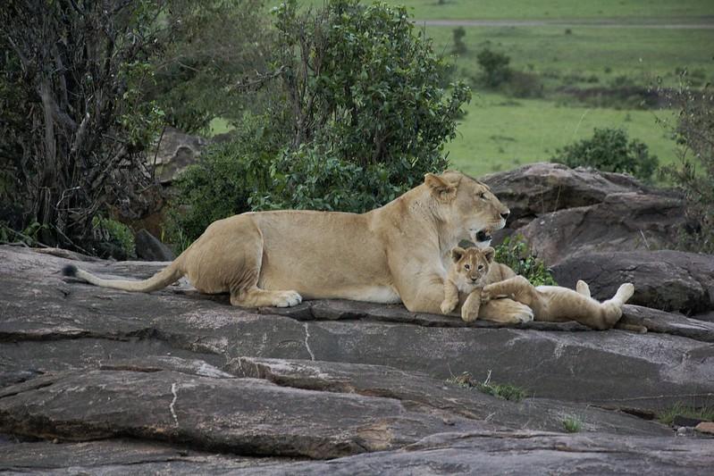 Maasai Mara 1 30