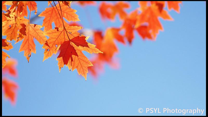Autumn colours in Montréal