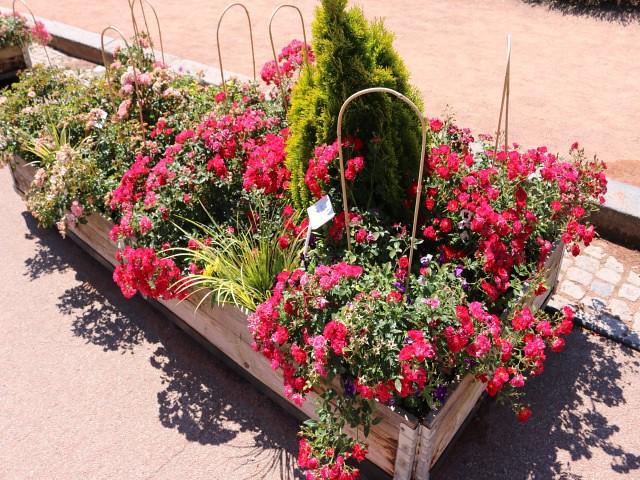 jardin des plantes obiective turistice lyon 5