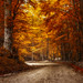 Fire In The Forest by tronik0
