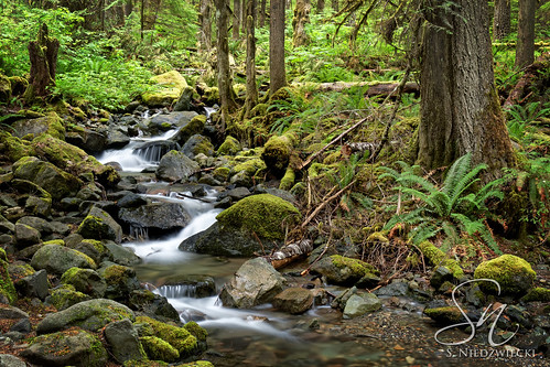 North Fork - Nooksack River 0645-17