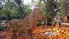 Land of Oz Pumpkin Village
