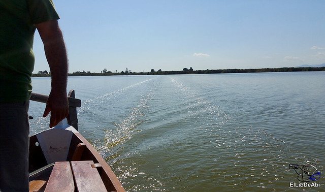 Paseo en barca por la Albufera de Valencia (5)