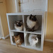 Cat Storage Unit by Stokey