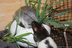 #RattieSitting: Exploring the rattie garden