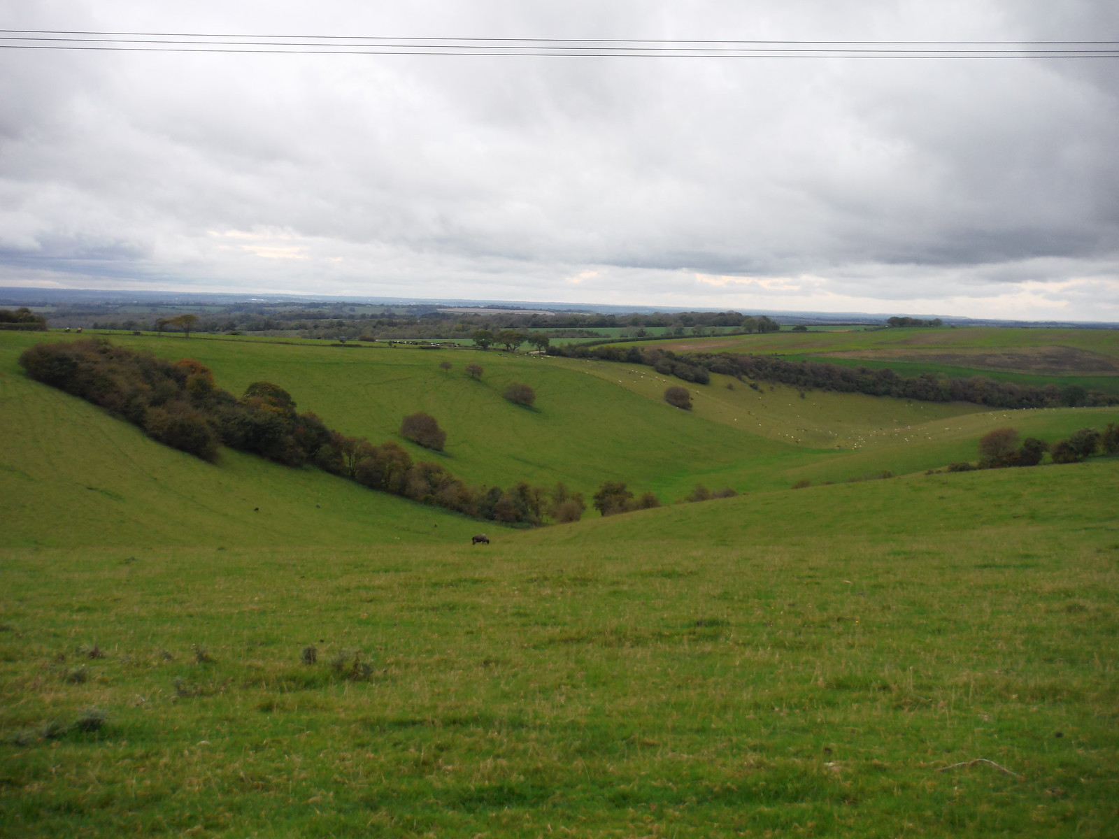 Some Down SWC Walk 183 - South Downs Way Section 2: West Meon to Petersfield