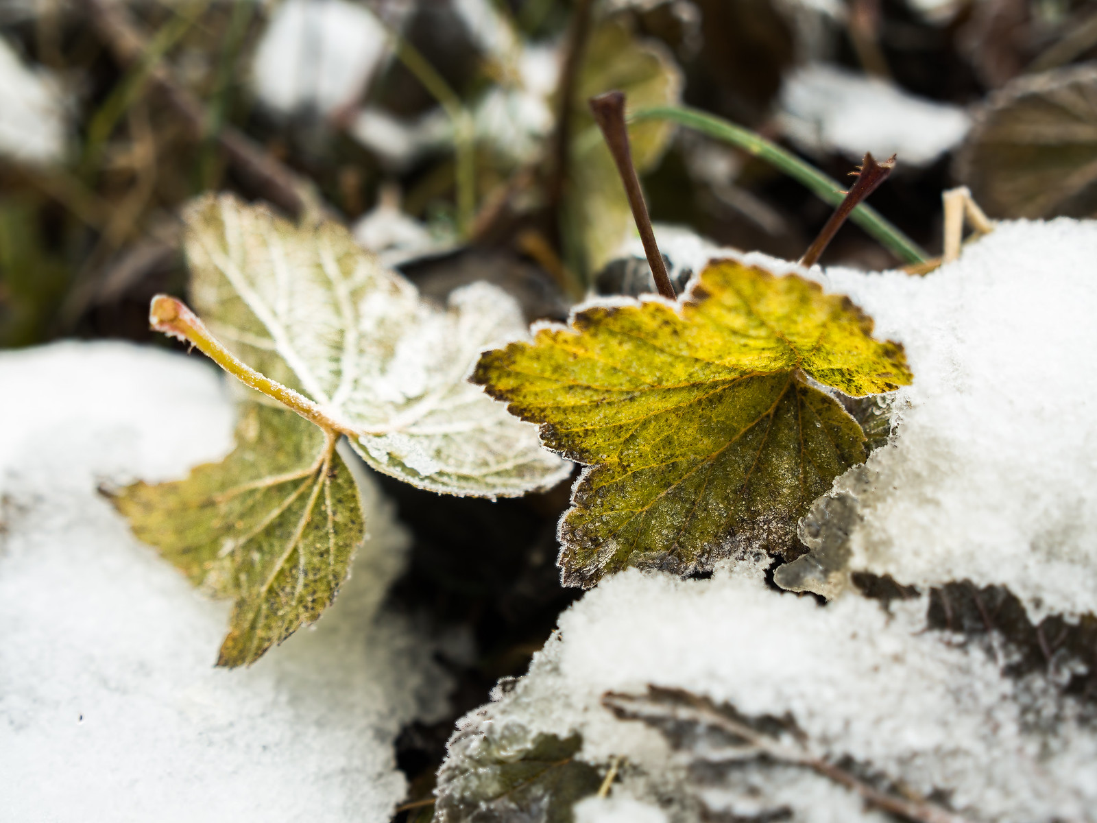 Talvi tekee tuloaan