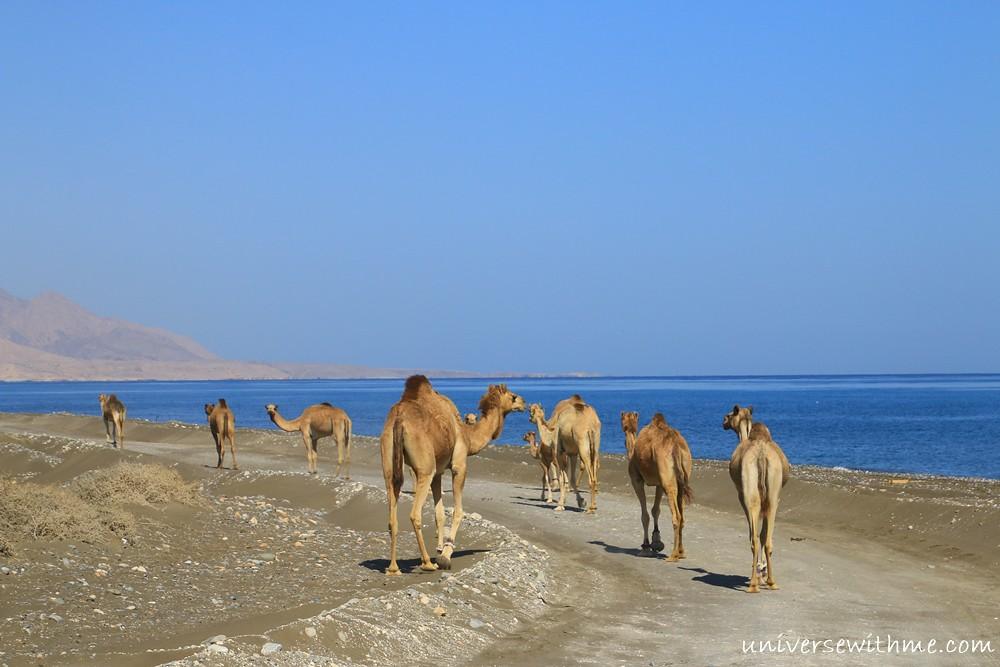 Oman_032