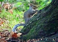 A Squirrel in the The Bog Garden