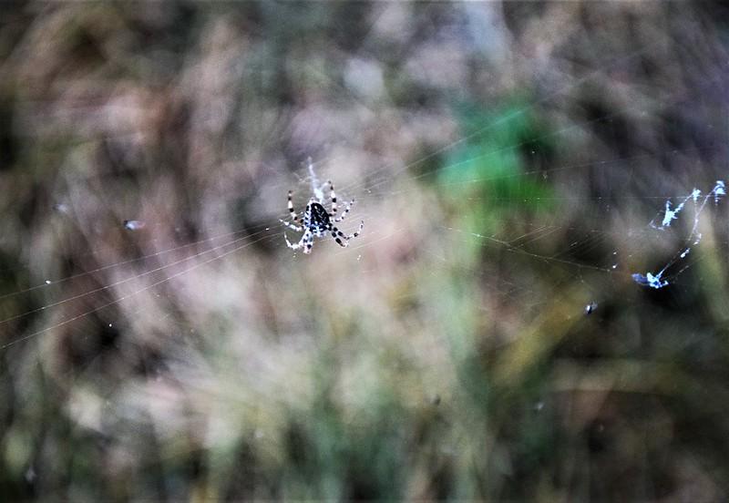 Spider Webs 14.10 (4)