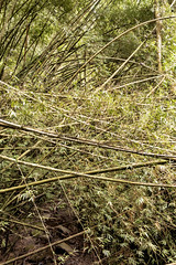 Bamboo Forest, version 1