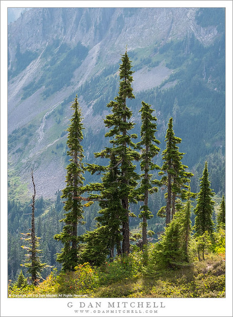 Back-Lit Trees, North Cascades