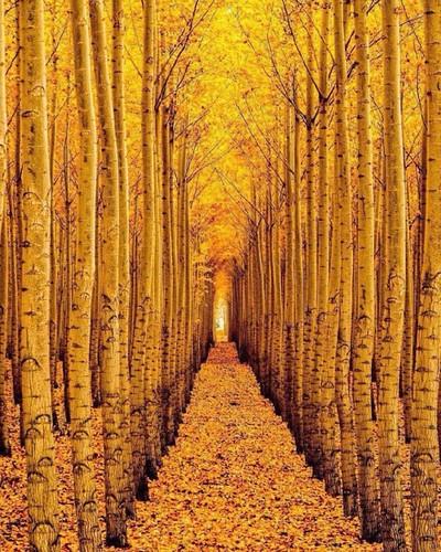 A colorfull fall portrait ~ Boardman, Oregon. Photo by...