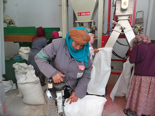 Thu, 10/19/2017 - 12:09 - Women working at the seed unit processing at El Grine (Kairouan)
