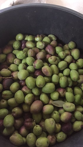 Green Olives for Pickling