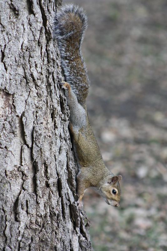 Squirrel Invasion 12