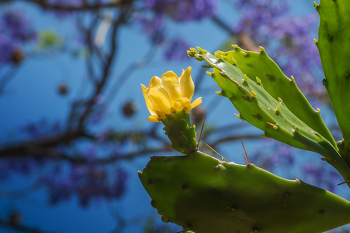 Autor: Luis_Garriga