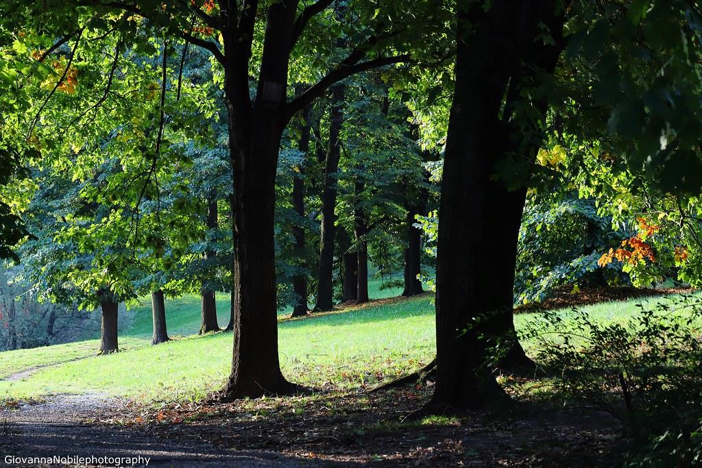 Al limitar del bosco 7