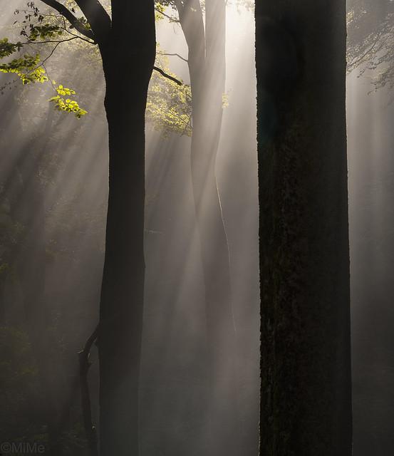 Herbstlicht im Pfälzerwald, Nikon D700, Sigma APO Macro 150mm F2.8 EX DG HSM