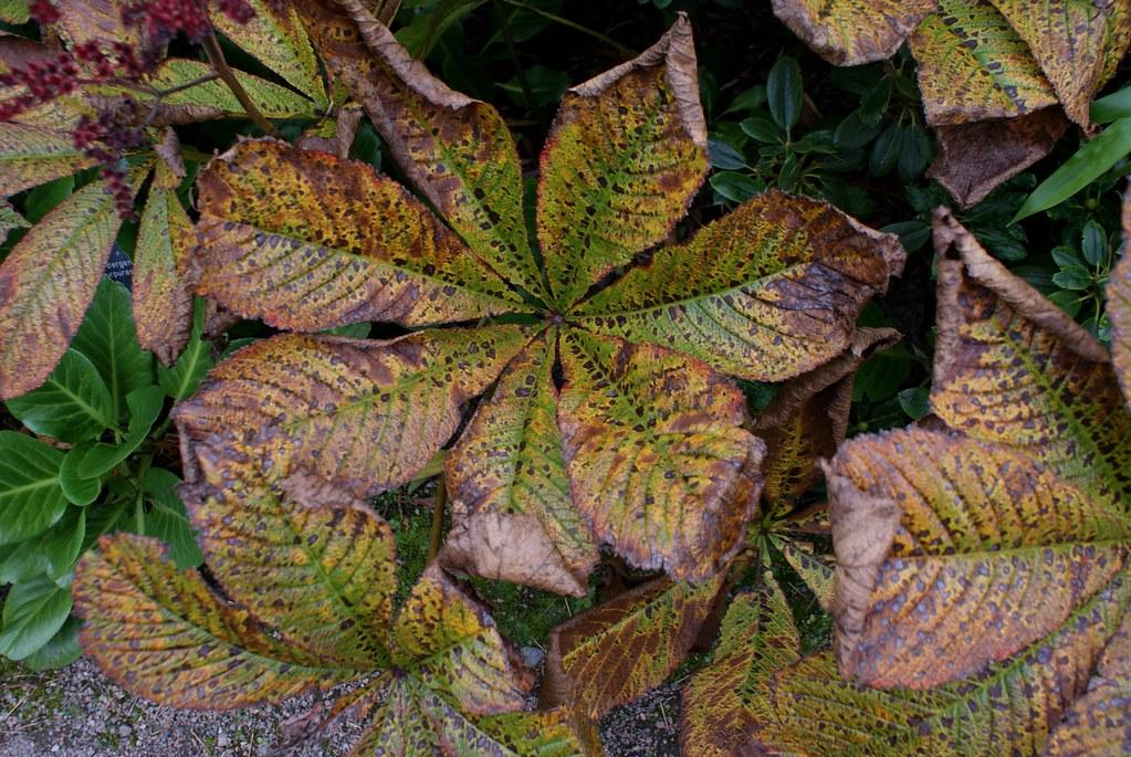 Magie de l'automne au jardin botanique d'Edimbourg.
