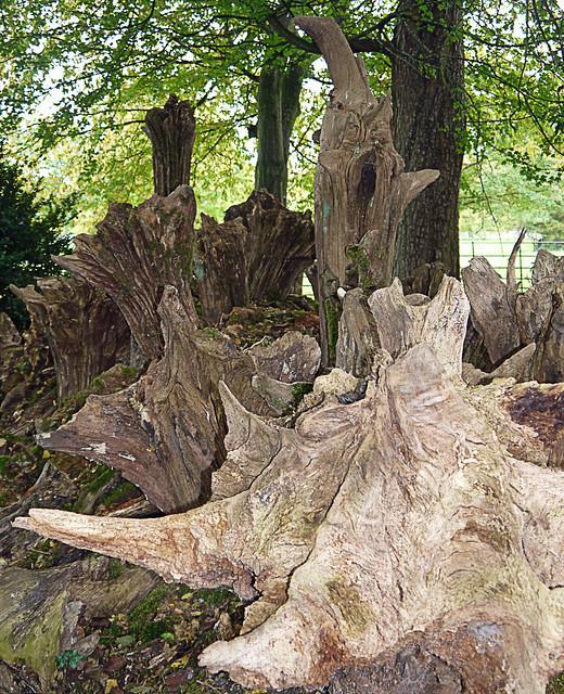Organised Stumpery