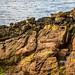 Cumbrae A Sandstone Shoreline