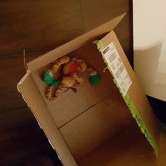 #cathoarder this is my cat Pippin Sirius's Christmas door toy..it wasn't in this box when I went to sleel last night...my cat hoarding his toys