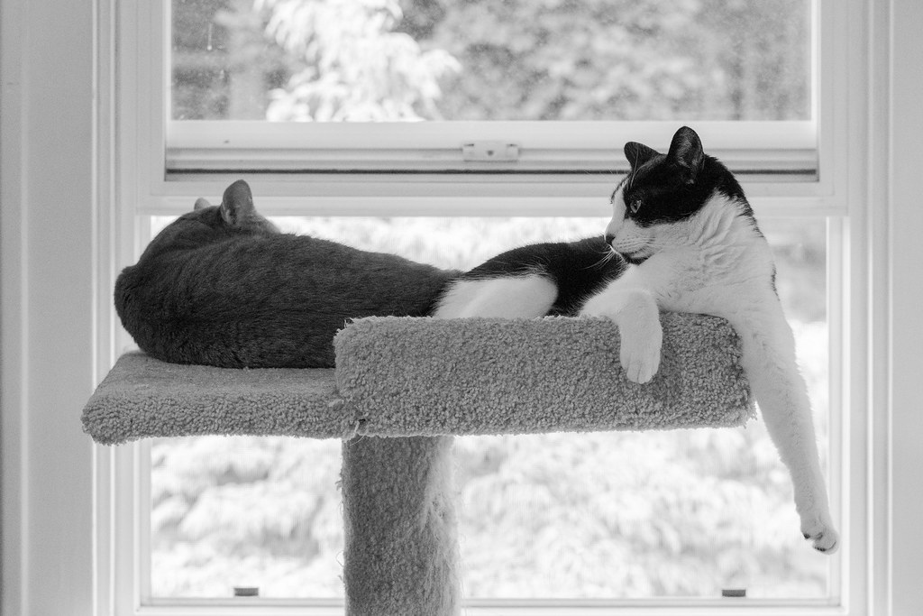 A black-and-white picture of our cats Sam and Boo sleeping side-by-side at the top of the cat tree