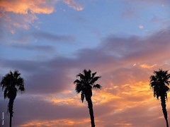 Autumn Sunset #sunset #ocaso #canaryislands #laspalmasdegrancanaria #streetphotography #islascanarias #laspalmas #lovenature #laspalmas #photooftheday #picoftheday #palmtree #palmera #autumn #otoño