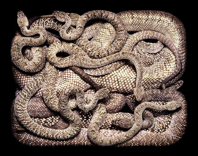 snake_art_20