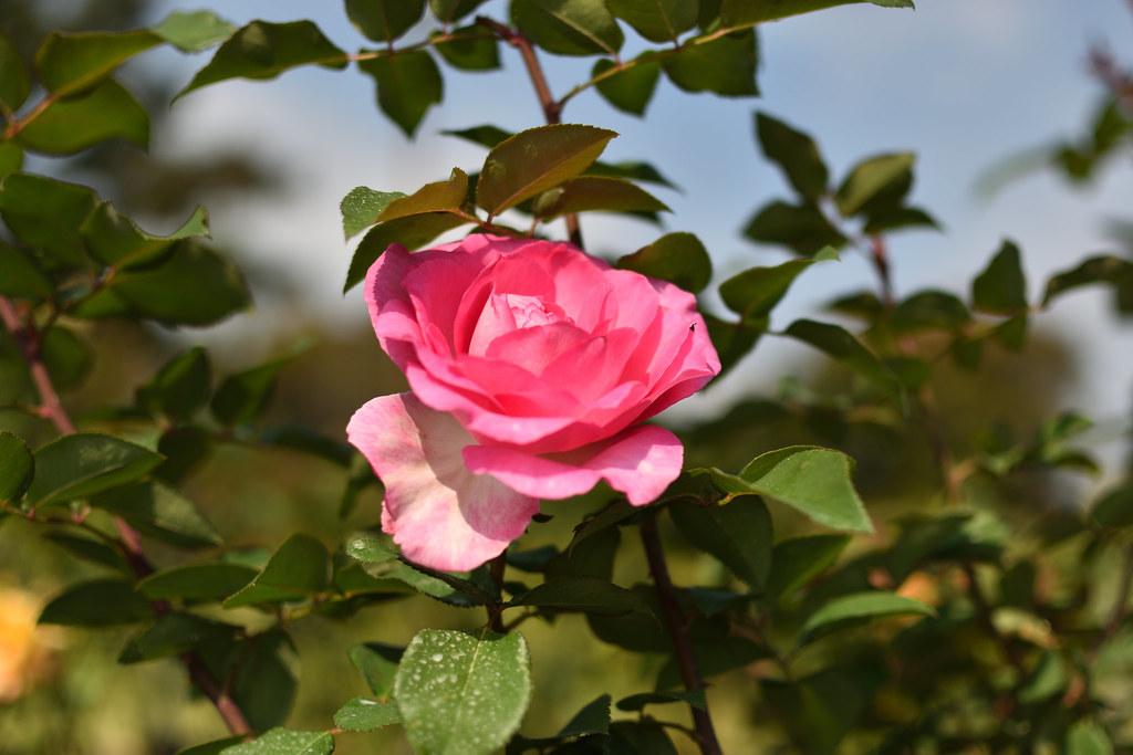 flowerpark02G