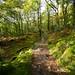 Skelghyll Wood, Ambleside  11